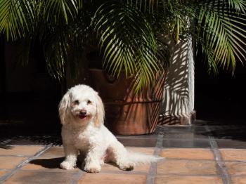 SPCA De PV