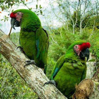 Three Nature Adventures we Love in Puerto Vallarta